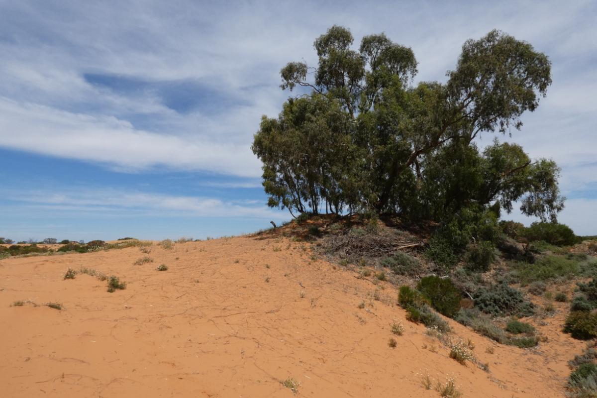 2020 Broken Hill Day Four 15