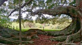 Norfolk Island's rugged coastline hides a bloody past